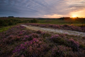 The New Forest in August (4 hours)